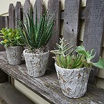 Weathered Oak Succulents Event Flowers