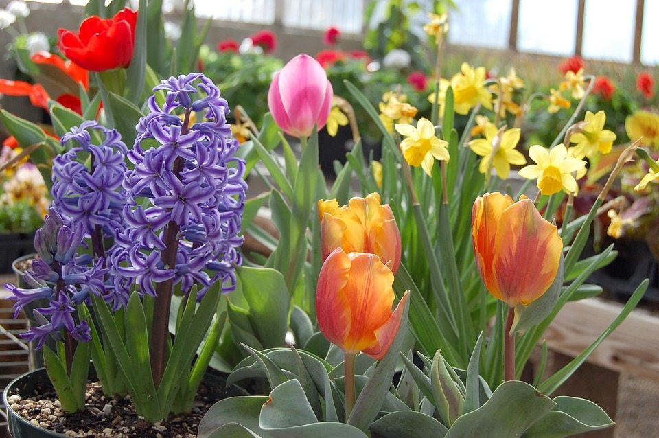 Bulb Flower Care How To Take Care Of Your Spring Bulbs