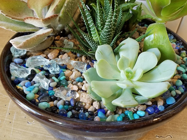 Succulent Garden Care And Tutorial Austin Florist Texas Blooms